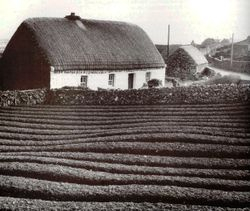 """Lazy bed"" and thatched cottage."