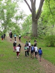 Walking through the Arnold Arboretum