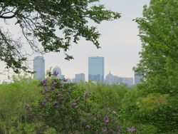 A view of downtown from the Arboretum