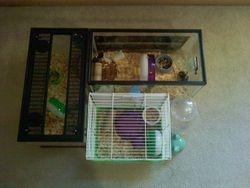 Old cage set-up