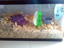 Penelope's cage :)