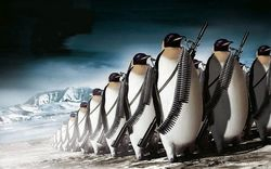 All adult penguin march