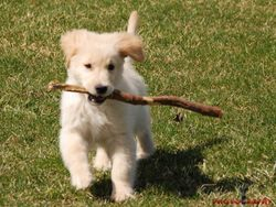 Scout and his Stick