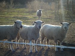 what are EWE lookin at?