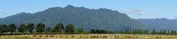 Panoramic view of Te Aroha  Mountain