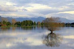 Waihou River in flood