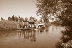 Paddle Boat On The Waihou River