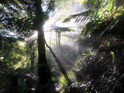 Mountain Bush   Te Aroha