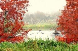 Autumn  Te Aroha Wetlands