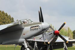 Mosquito And Mustang