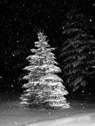 Night Snowfall