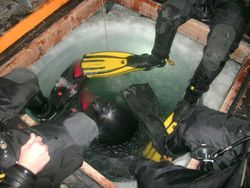 Weddel seal and divers