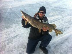 """Lake Champlain pike 36-1/2"""" 11.9lbs"""