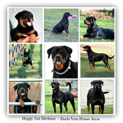 Happy 2nd Birthday ~ Darla Vom Hause Jaras