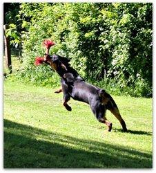 Oreo Loves to Run