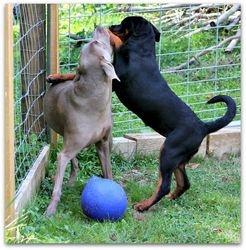 Darla and Ziggy