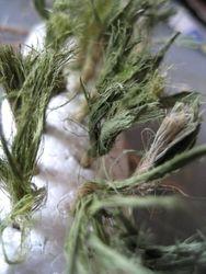 Garden twine grass