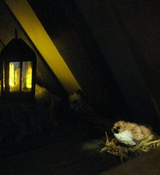 New inhabitant in the loft