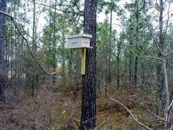 Swarm Trap Box