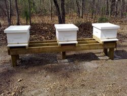 Ready for bees!