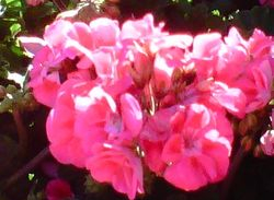 Bright Flowers always brighten a patients day...