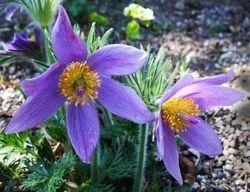 Flowers by Pat McLean (HM)