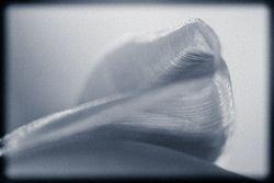 Selenium Petal by Linda Rutherford (AW)