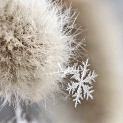 Snowflake by Annette VanLengerich (AW)