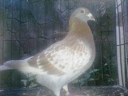 Gift Bird from VSQ