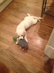 Cooper loves his duck!