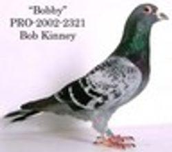 BOB KINNEY - SILVERADO LOFT
