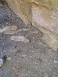 Pictograph - mountain lion tracks at pictograph site