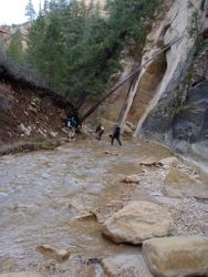 The COLD narrows