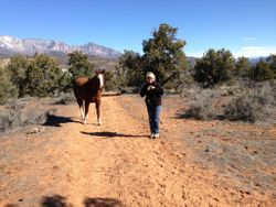 Tammy finding a lost horse on the trail