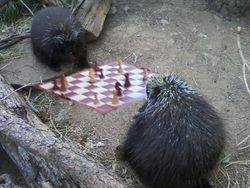 Porcupine Chess