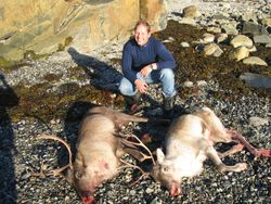 Reindeer Greenland