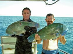 couple of 10kg tuskies from bunker group