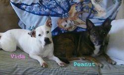 Vida and Peanut