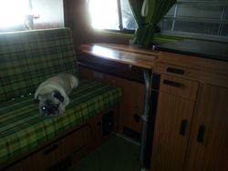 Bosko the Pug with his camper table in San Diego
