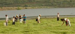 Students collecting near Bental water reserve