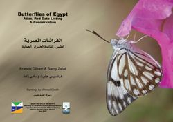 Butterflies of Egypt book