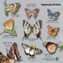 Botanical Garden Butterflies Puzzle - Jerusalem
