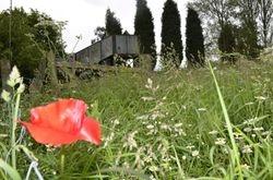 poppys growing in the field beside the railway