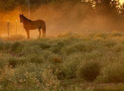 Morning around the Farm