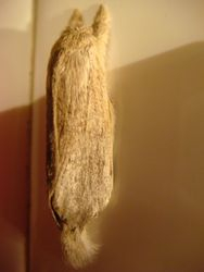 Moth (surly!)