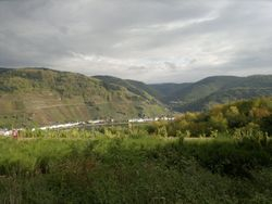 Zell [Mosel]