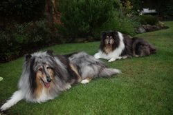 King and Skye