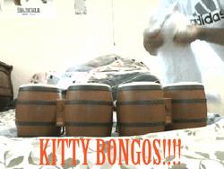 gatos band