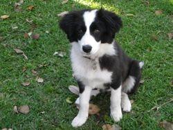 Tillie as a pup