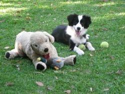 Tillie & Toby